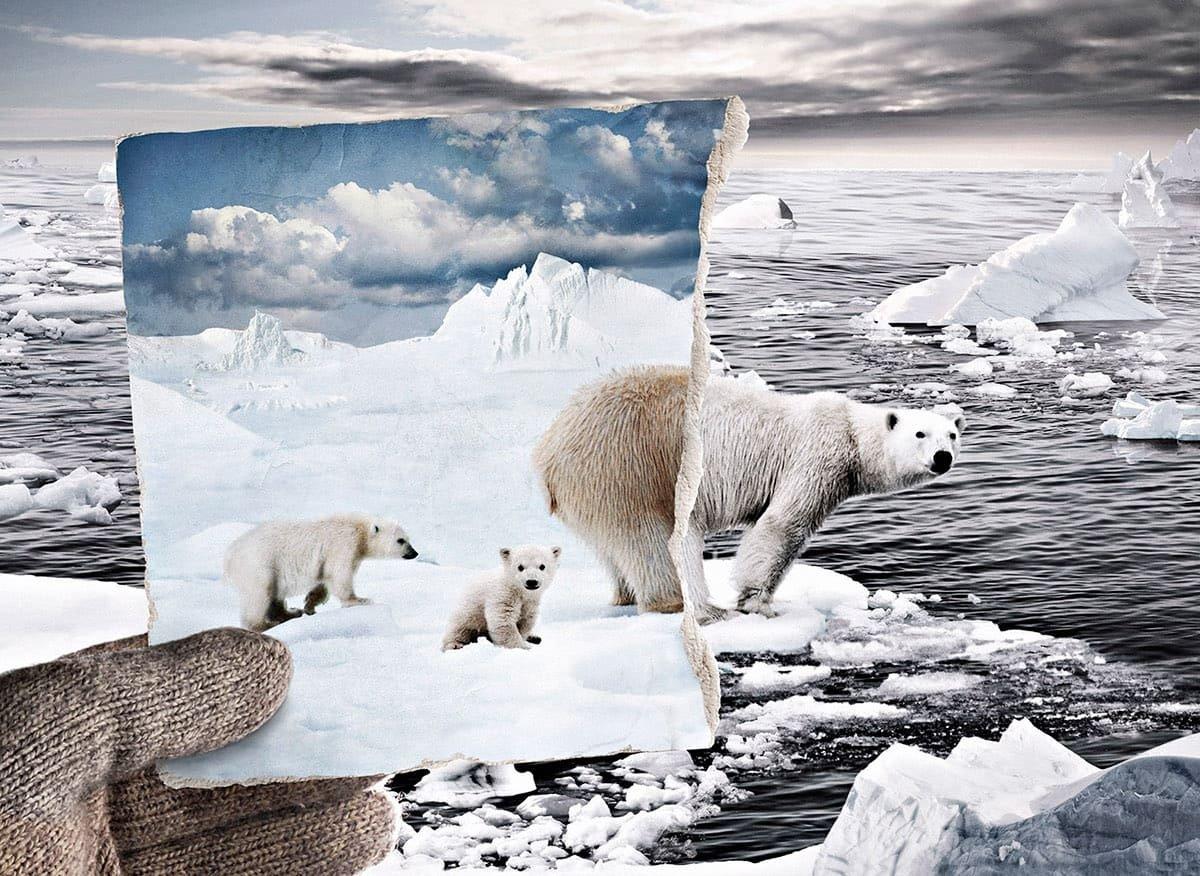 Alimlər: 'Qlobal istiləşmə prosesləri artıq işə düşüb. CO2 səviyyəsinin azaldılması heç nəyi dəyişməyəcək'